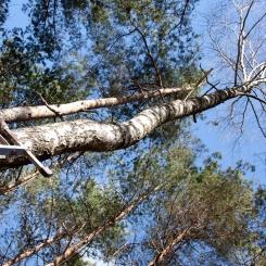 Inkilėlių kabinimo akcija, 2011-03-27, medis