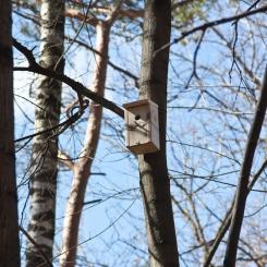 Inkilėlių kabinimo akcija, 2011-03-27, inkilas, medis