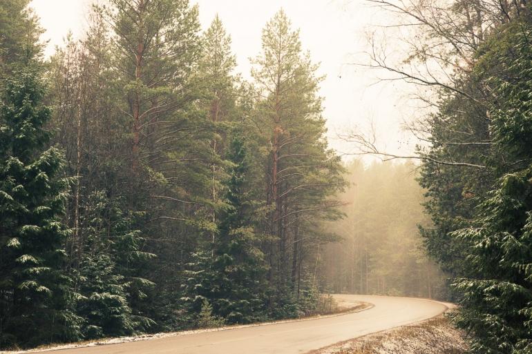 Landscape, Lietuva, Lithuania, Pabrade, cold, eglė, fir, fog, forest, kelias, medžiai, mist, miškas, morning, road, rytas, rūkas, trees, šalta