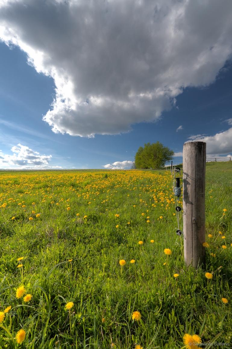 Lithuania, Lietuva, pavasaris, hdr, 2011, Aukštaitija, pienės, laukai, medis, dangus, debesys, pieva