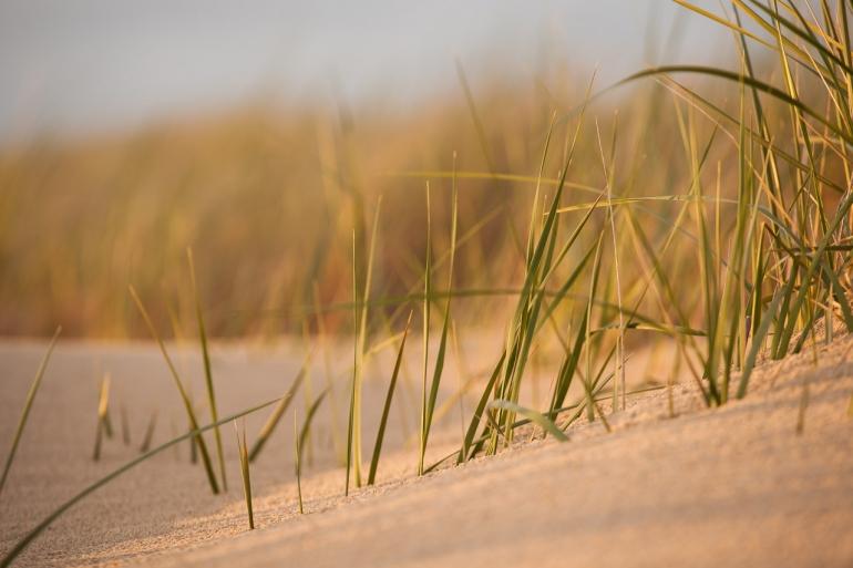 Baltic sea, Baltijos jūra, dunes, jūra, Lietuva, Lithuania, sea, summer, šilta, Šventoji, vasara, warm