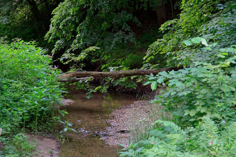 Vilnius, Lietuva, Lithuania, Verkių regioninis parkas, upelis, miškas, 2011, Cedrono upelis
