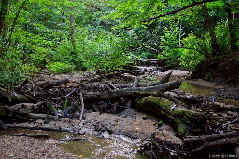 Vilnius, Lietuva, Lithuania, Verkių regioninis parkas, upelis, miškas, medžiai, 2011, Cedrono upelis