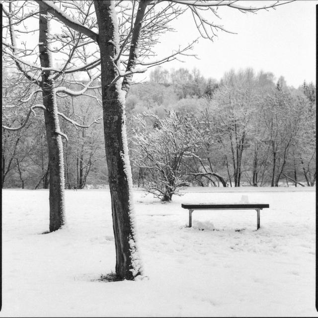 Bronica SQ-A, Zenza Bronica Zenzanon-PS 80mm f2.8, Ilford Delta 3200 Pro, 6x6, 2013, Vilnius, Lietuva, Lithuania, miškas, forest, žiema, winter, sniegas, snow, medžiai, trees, juosta, film, suolas, bench