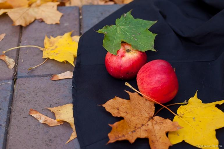 Vilnius, Lithuania, Lietuva, 2011, ruduo, autumn, mergina, portretas, obuolys, obuoliai, apple, leaves