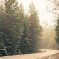 Landscape-Lietuva-Lithuania-Pabrade-cold-eglė-fir-fog-forest-kelias-medžiai-mist-miškas-morning-road-rytas-rūkas-trees-šalta