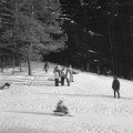 Kodak-Tri-X-400-Mamiya-C220-6x6-2012-Vilnius-Lietuva-Lithuania-miškas-forest-žiema-winter-sniegas-snow-medžiai-trees-rogutės-sled-žmonės-people-juosta-film