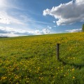 Lithuania-Lietuva-pavasaris-hdr-2011-Aukštaitija-pienės-laukai-medis-dangus-debesys-pieva